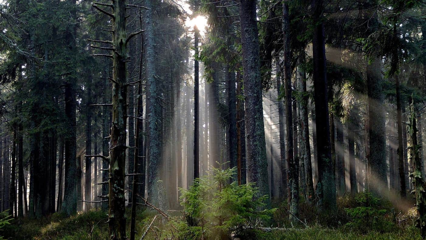Forest With Sunlight, Inspirational